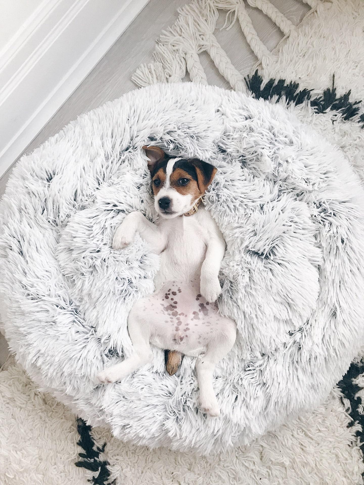 fluffy hondenmand kopen