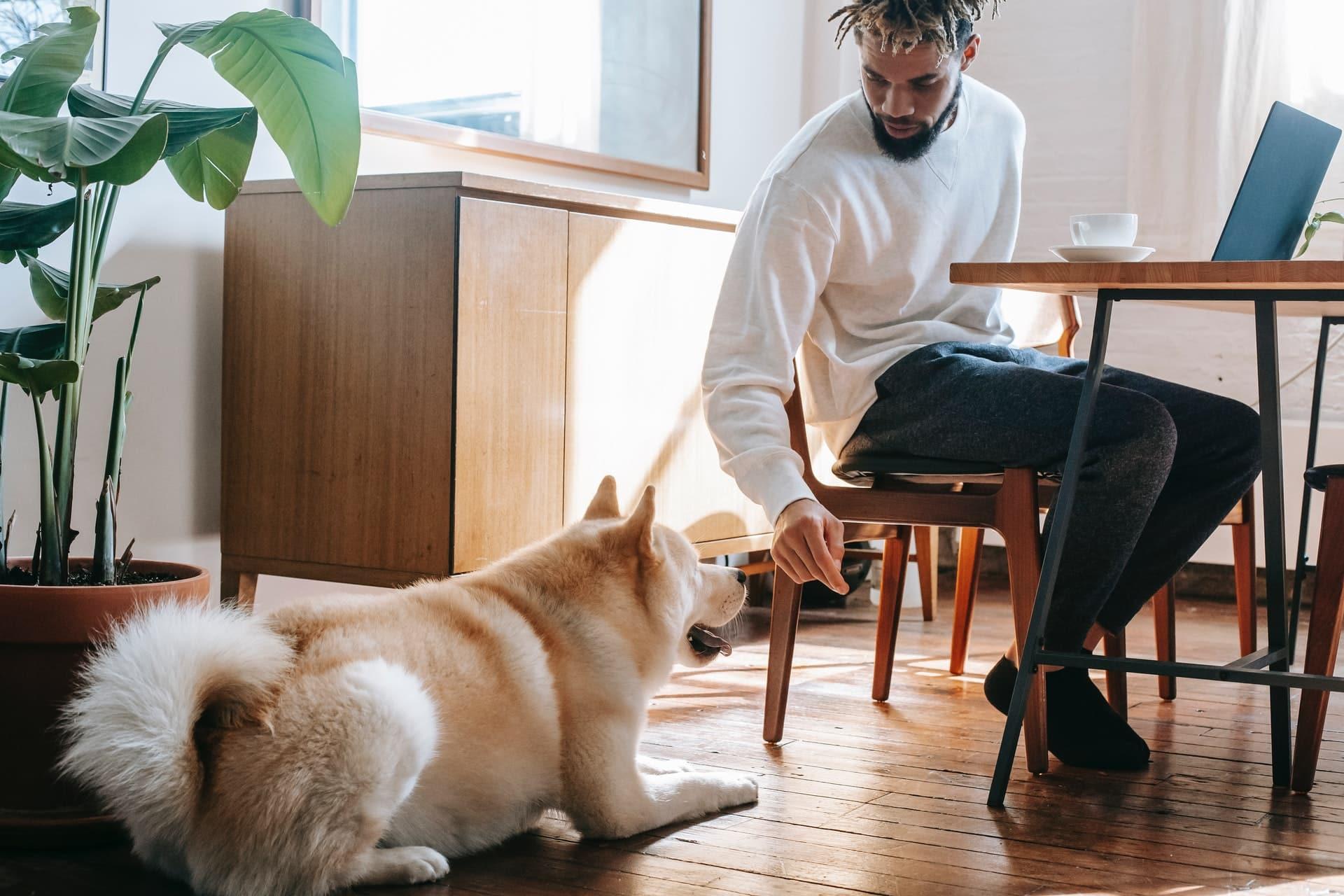 gezond honden gewicht