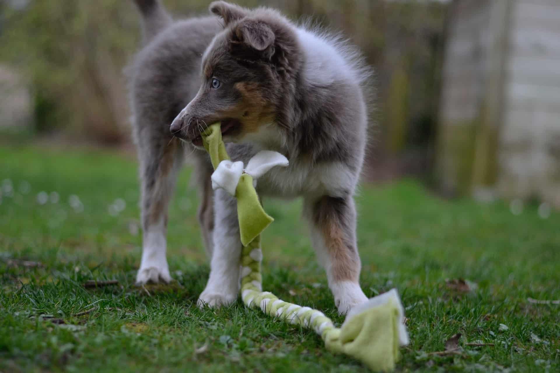 puppyspeelgoed